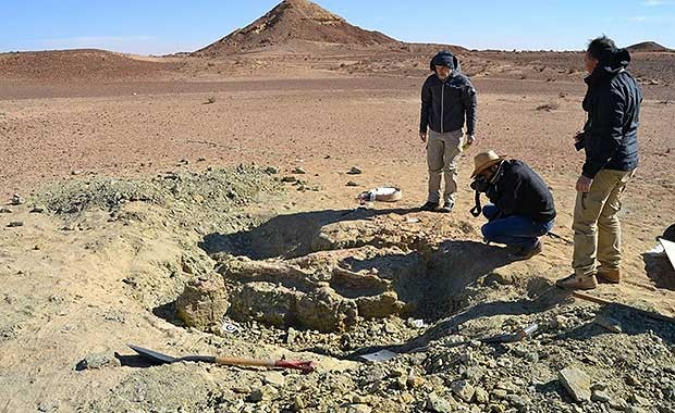 Excavating for fossils of the M. Rex (Fanti)