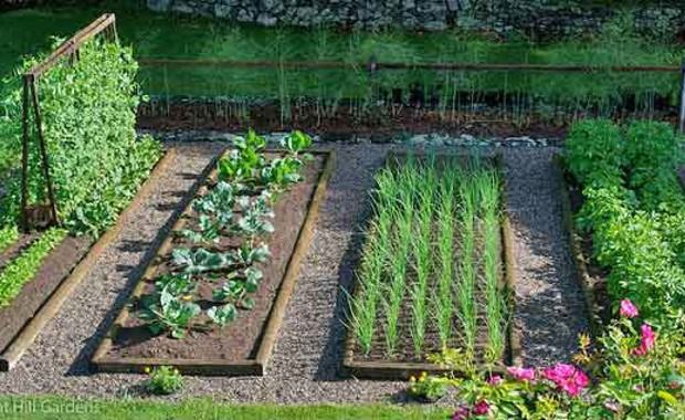 Photo Credit: Vegetable Gardening Life