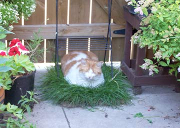 How and Why to Build a Cat Garden