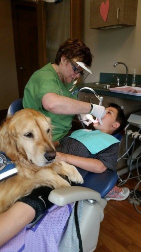 dentistdog1