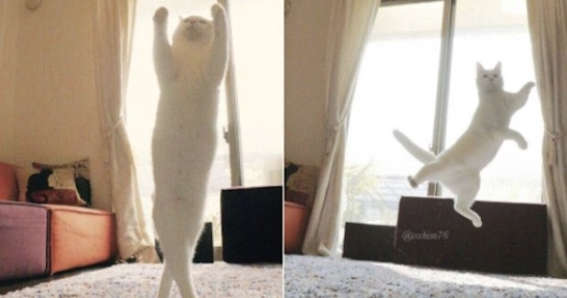 Source: Twitter/Chisa