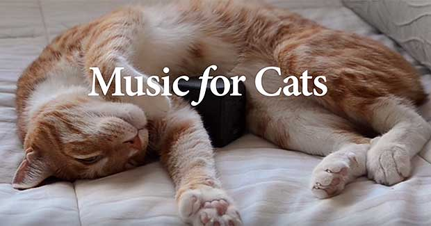 Source: Music For Cats/Kickstarter