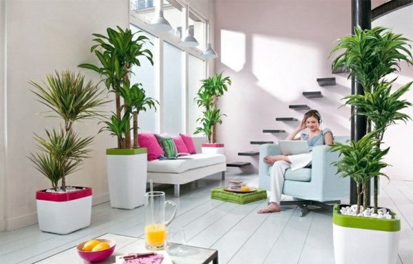 feng-shui-plants-for-harmony-and-positive-energy-in-the-living-room-12-180
