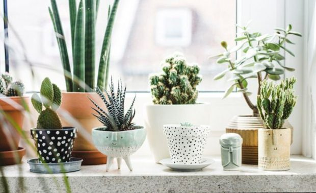 home-decor-indoor-plants