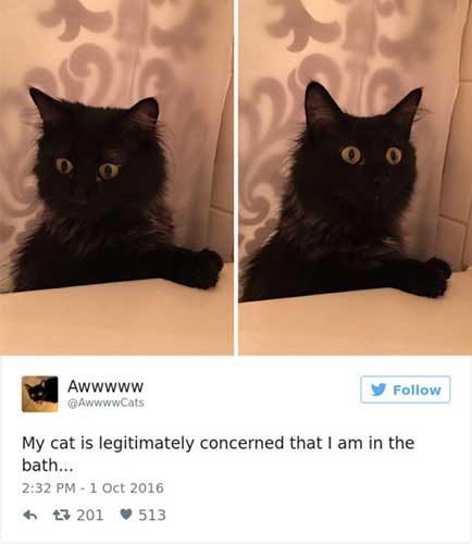 cattweets_bath