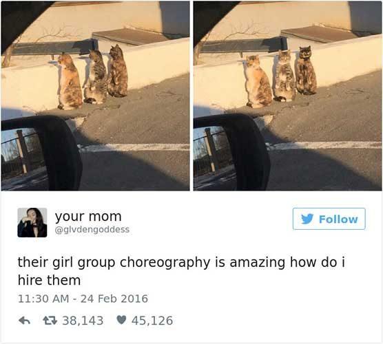 cattweets_choreography