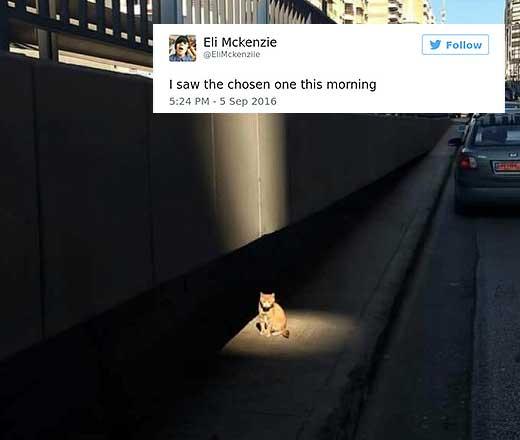 cattweets_chosenone