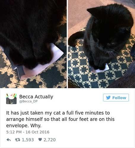cattweets_envelop