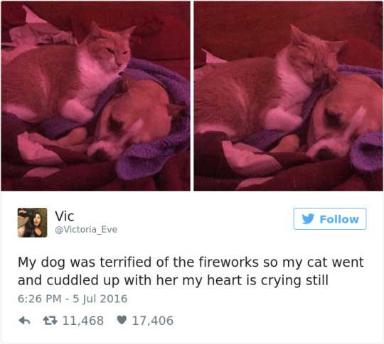 cattweets_fireworks