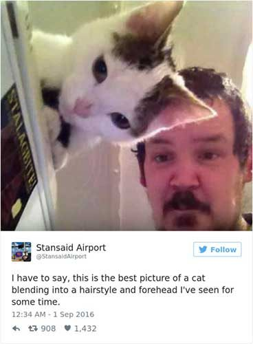 cattweets_hairstyle