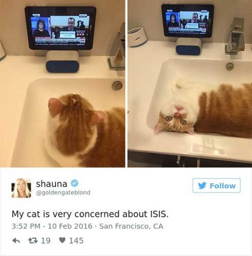 cattweets_isis
