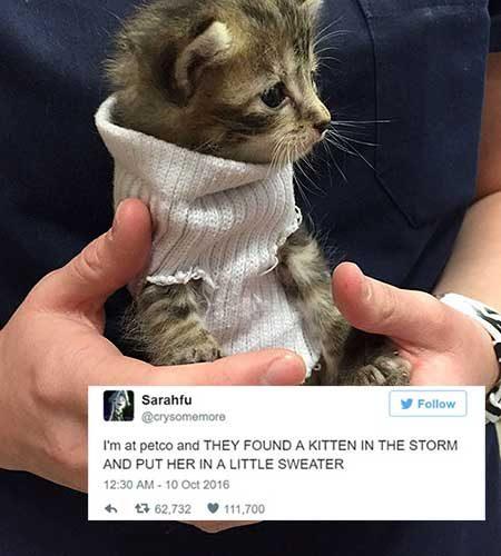 cattweets_kittensweater