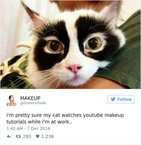 cattweets_makeup