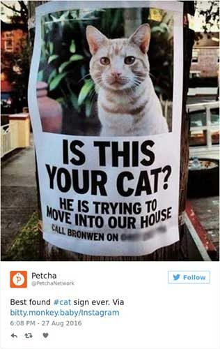 cattweets_movingcat