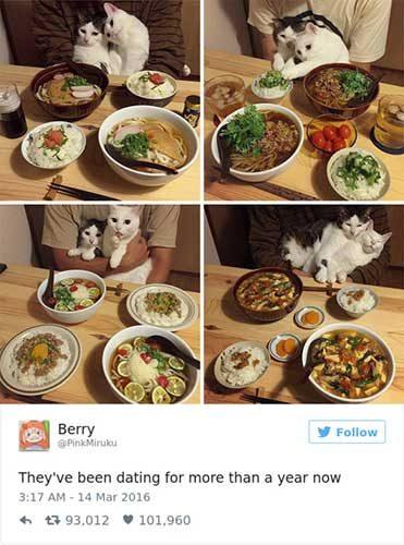 cattweets_relationshipgoals