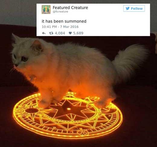 cattweets_summoned