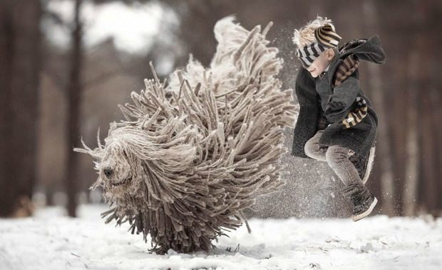Source: Komondor Andy Seliverstoff Photography/Facebook
