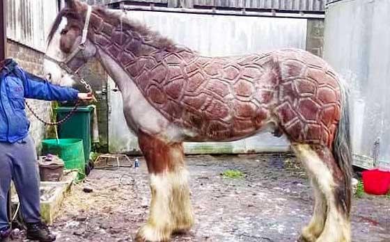 beautiful horse haircuts