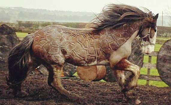 Beautiful Horse Haircuts Created By Skilled Groomer Jillian Scott