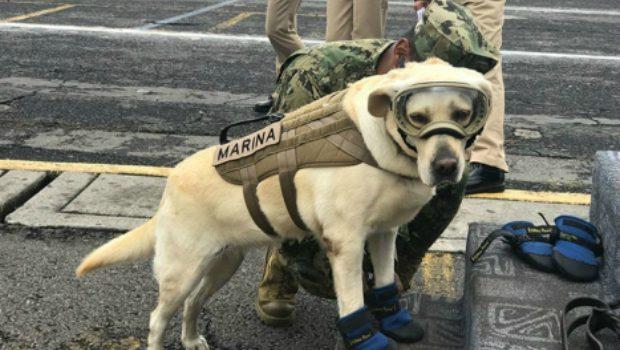 dog rescue earthquake