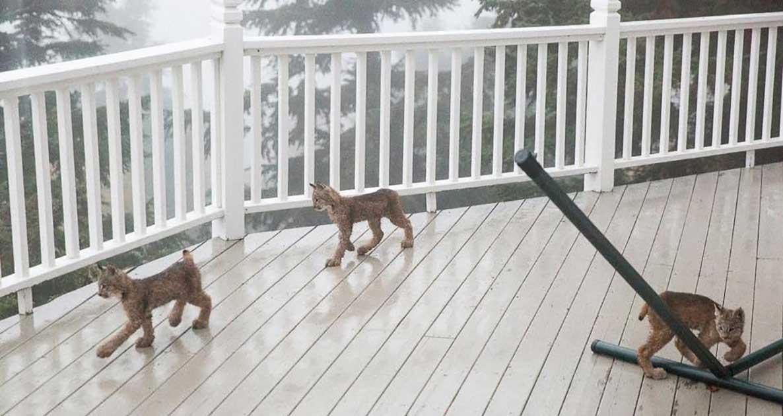lynx porch deck