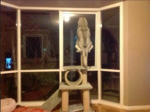 1 a dog cat 3