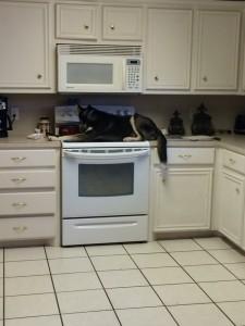 1 a dog cat 6