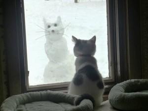 cat-snowman-funny