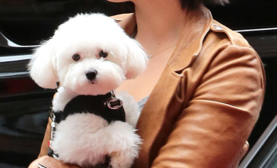 Demi and her dog