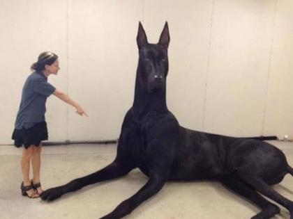ELA_dog