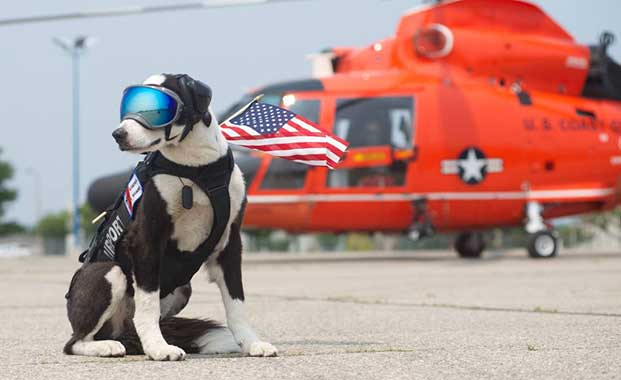 piper airport dog