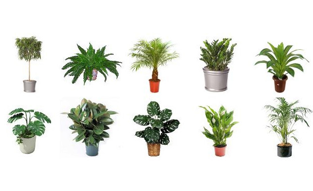 Best air filtering plants to help filter out harmful for Air filtering plants