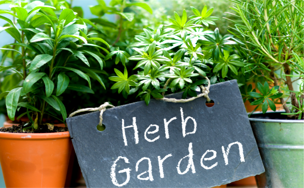 The Secret to Growing Herbs in Your Apartment