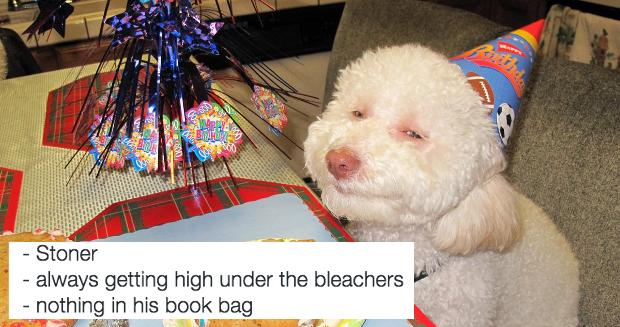 Source: Instagram/Dogs in High School
