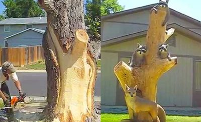 Source: Facebook/Hollow Log Tree Carving and Sculpture