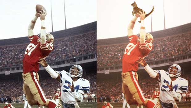 Source: 49ers.com/Tumblr-Great Meowments In Sports History