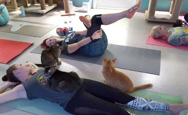 Cat Yoga Is the Latest Exercise Trend You Must Try
