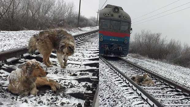 Source: Facebook/Denis Malafeev