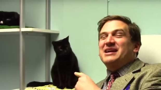 Cat Adoption Infomercial
