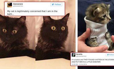 Cat Twitter
