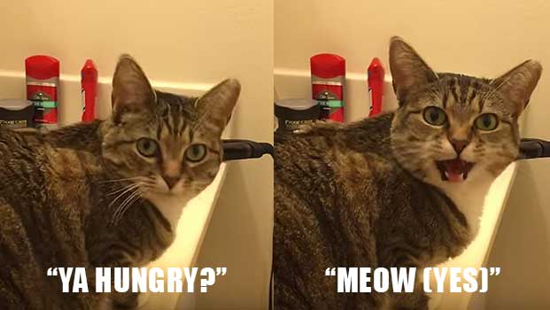 Cat Answers