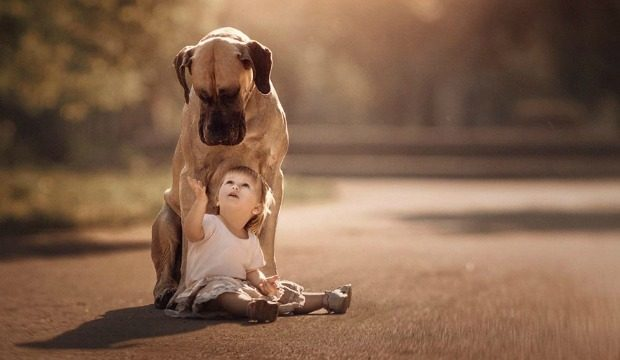 Source: Great Dane Andy Seliverstoff Photography/Facebook