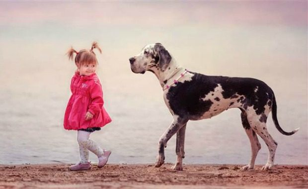 Source: Harlequin Great Dane Andy Seliverstoff/Revodana Publishing