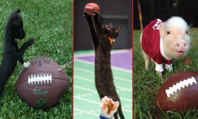 animals playing football