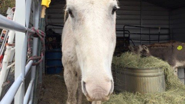 Source: Facebook/Becky's Hope Horse Rescue