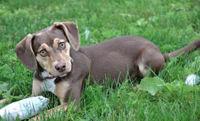 Rescue Dog Peanut