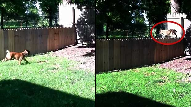 fence for stella