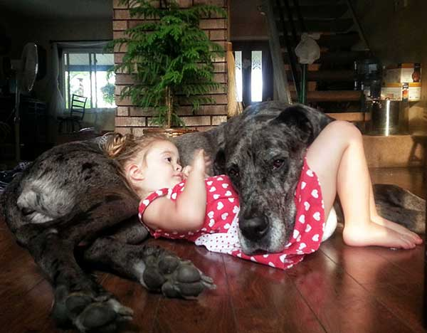 kids playing with big dogs