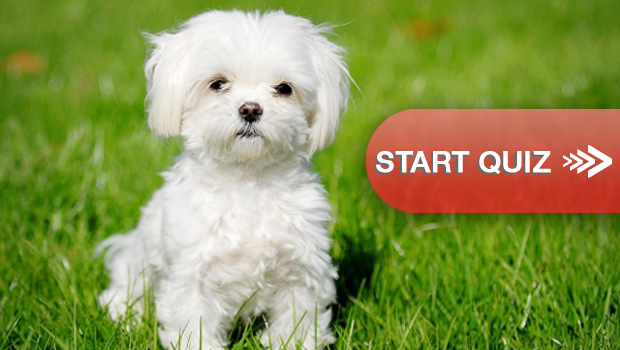 Can You Name The Dog Breeds By Looking At These Puppies