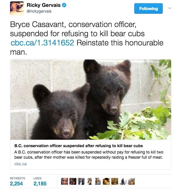 orphaned bear cubs